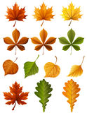 Autumn leaves. Vector illustration - autumn leaves  icon set Royalty Free Stock Image