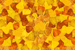 Autumn leaves. Yellow autumn leaves for background Stock Image