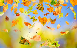 Autumn Leaves. Falling and spinning against the blue sky stock image