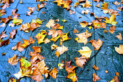 Autumn leaves. Colors of fall royalty free stock photo