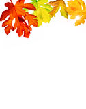 Autumn leaves. Beautiful background with autumn leaves Stock Photos