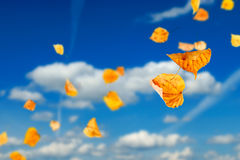 Autumn Leaves. Falling and spinning against the blue sky Royalty Free Stock Photos