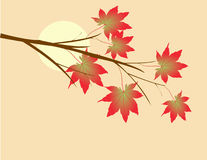 Autumn leaves. On a sunny day Stock Photos