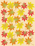 Autumn leaves. On a sunny day Royalty Free Stock Photography