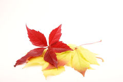 Autumn leaves. On a white background. A place for your text stock photography