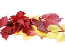 Autumn leaves. On a white background. A place for your text stock photos
