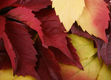 Autumn leaves. Autumn background from the present leaves stock photos