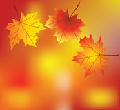 Autumn leaves. Vector maple leaves on abstract background Stock Photography