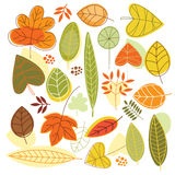 Autumn leaves. Set autumnal leaves in Stock Photography