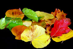 Autumn leaves. With different colors isolated on black Royalty Free Stock Images