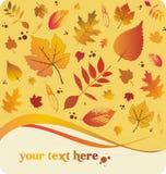 Autumn leaves. Decorative elements Stock Photo