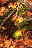 Autumn Leaves. New England  Scene In Vermont Stock Image