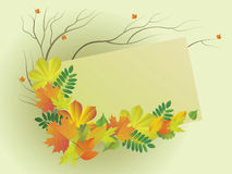 Autumn leaves. Vector  illustration with the place for text with a composition from autumn leaves Stock Photography