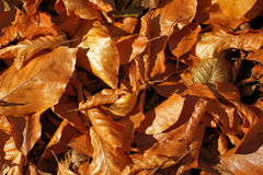 Autumn leaves. Fallen autumn leaves on the ground Royalty Free Stock Images