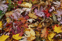Autumn leaves. Of different colors in the park Stock Photo