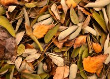 Autumn leaves. Autumn leaves -beautiful, unusual background Royalty Free Stock Photo