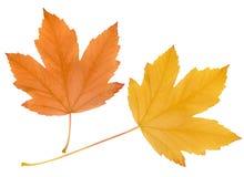 Free Autumn Leaves Stock Photos - 12962143