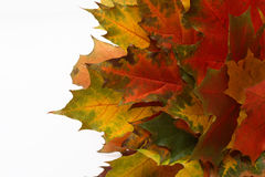 Autumn leaves. Autumn paints on a white background Royalty Free Stock Photography