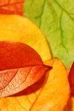 Autumn leaves. Macro photo of fallen autumn leaves - shallow depth of field stock photos