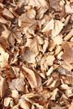 Autumn leaves. Thick yellow rug of autumn leaves Royalty Free Stock Photography
