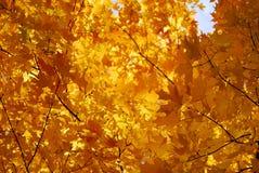 Free Autumn Leaves Royalty Free Stock Photo - 13475705