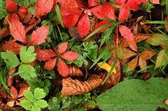 Autumn leaves. Autumn/fall bright colorful leaves carpet Stock Photos