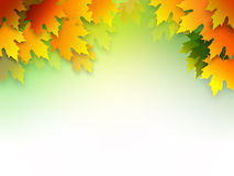 Autumn leaves. Illustration of Autumn leaves on white Stock Photography