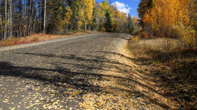 Autumn leaves. Along Northern British Columbia road Royalty Free Stock Image