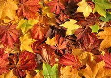 Free Autumn Leaves Stock Image - 1457931