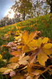 Autumn leaves. On grassy bank Stock Images