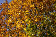Autumn leaves. Colorful background of autumn foliage trees Royalty Free Stock Photography