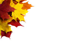 Autumn leaves. Border of colourful maple leaves in left top corner - isolated Royalty Free Stock Photography