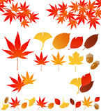 Autumn leaves. Set of autumn leaves. Vector illustration Stock Photo
