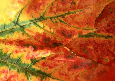 Autumn leaves. Abstract of colors autumn leaves Stock Image