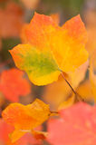 Autumn leaves. Abstract image of autumn leaves Royalty Free Stock Photos