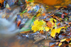 Autumn leaves. Autumnal leaves lying in a stream. A slow shutter speed was used to give the water its smooth appearance Stock Image
