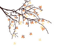 Autumn leaves. Illustration of colorful leaves on an isolated  bough Royalty Free Stock Photos