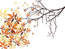 Autumn leaves. Illustration of colorful leaves on an isolated  bough Royalty Free Stock Images