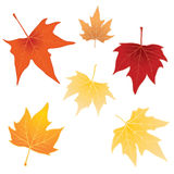 Autumn leaves. Six autumn leaves on white Royalty Free Stock Images