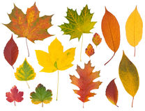 Autumn leaves. Set of multi-colored autumn leaves