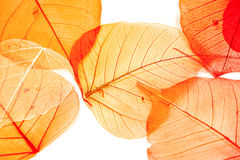 Autumn leaves Stock Image