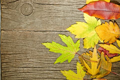Autumn leaves. On old wood. Horizontal view royalty free stock images