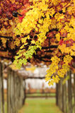 Autumn Leaves. The vines of Saint Clair Family Estate, Blenheim, New Zealand Stock Images