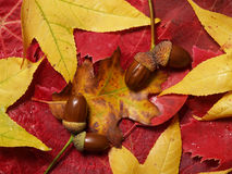 Autumn leaves. Photograph of still life autumn leaves,shot in studio Stock Images