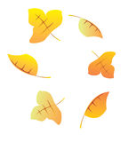 Autumn leaves. A vector illustration of isolated colorful autumn leaves Royalty Free Stock Image