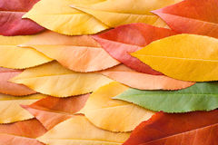 Autumn leaves. Colorful autumn leaves lie in one plane Stock Images