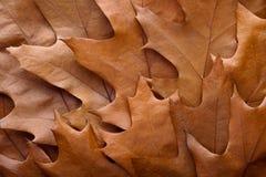 Autumn leaves. Stock Image
