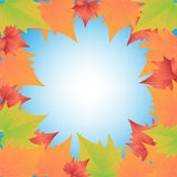 Autumn Leaves. Framework from color autumn leaves Stock Image