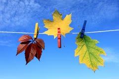Autumn leaves. Against the sky Stock Photos