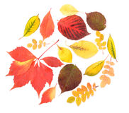Autumn leaves. Of different color lie on a table Stock Photos